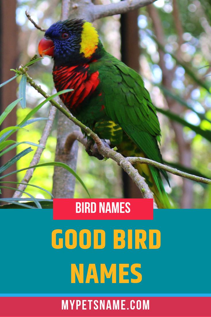 Good Bird Names Cute Pet Names Birds Name List Parakeet Names