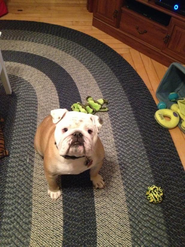 What Ya Want Mom English Bulldog Lover Bulldog Lover Bulldog