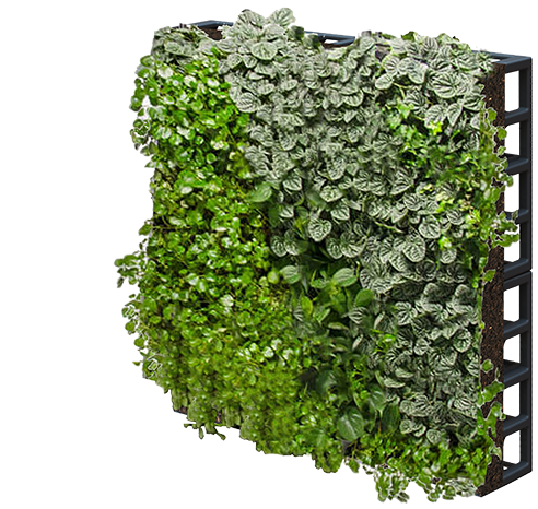 Green Wall Designs   Sustainable Living Plant Wall Design
