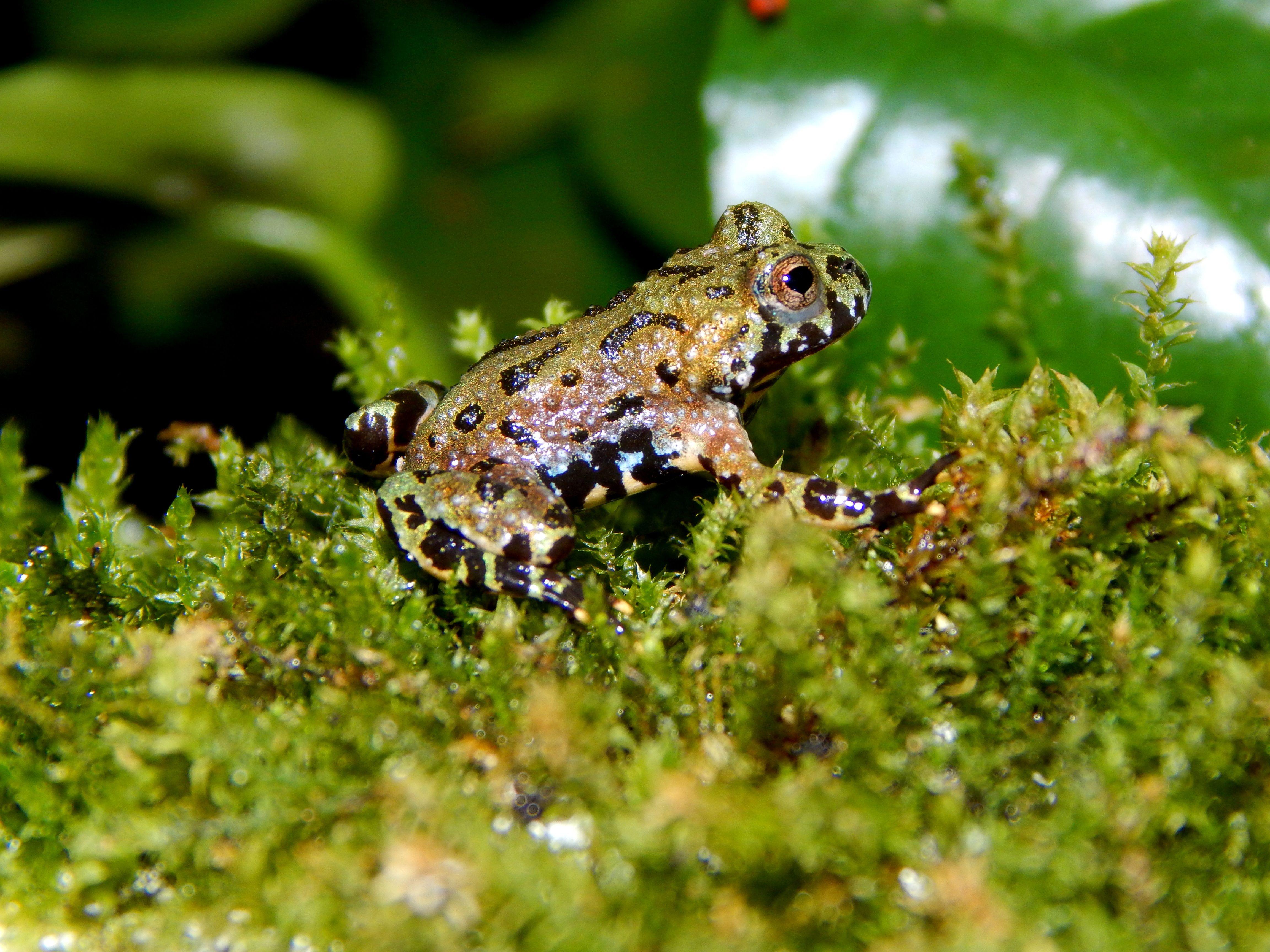 Pin på Groddjur amfibie
