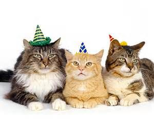 Cats in Party Hats - Bing Images | Kittens cutest, Happy cat, Funny animal  photos