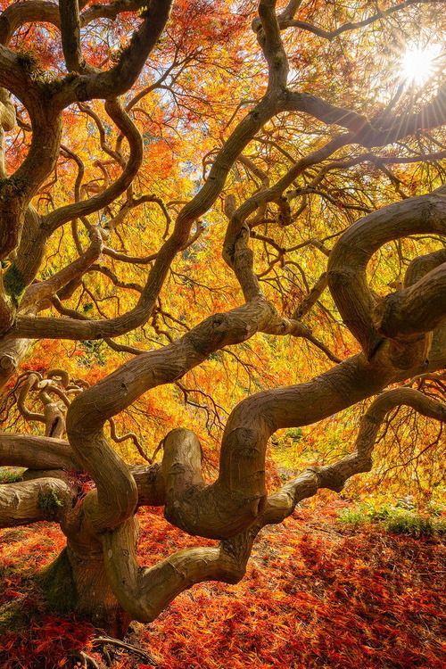 ee6fa097d7 Fall color explosion by Protik Hossain | nature | Amazing nature ...