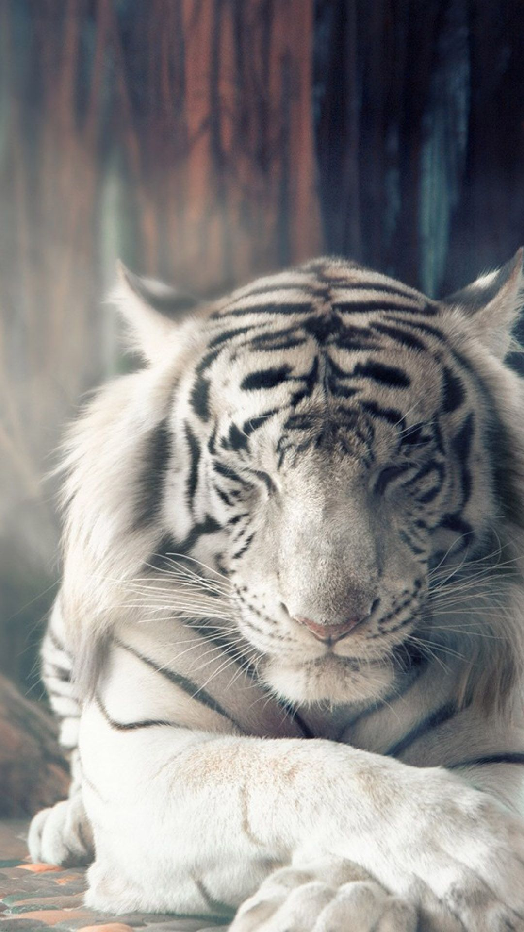 White Tiger Autumn Sunlight Hd Mobile Wallpaper Tiger Spirit Animal Animals Beautiful Tiger Wallpaper