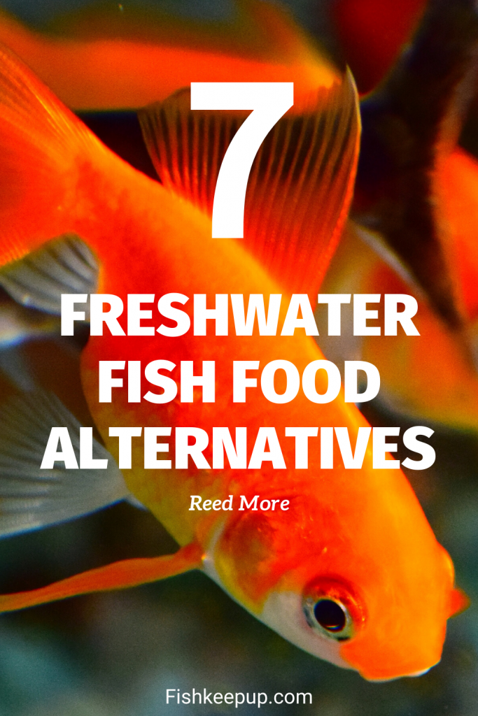 what to feed fish besides fish food
