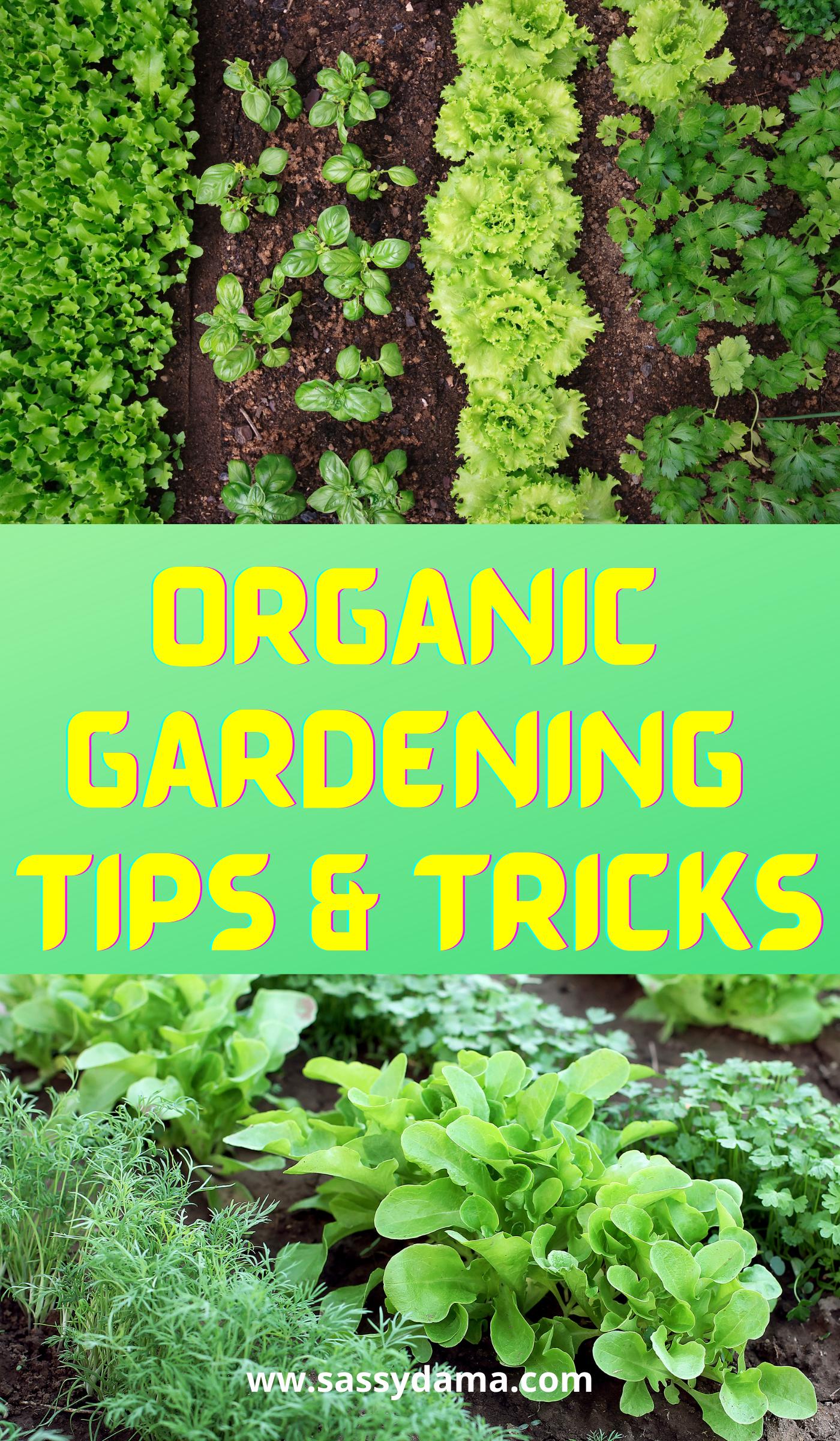 Pin On Gardening Tips