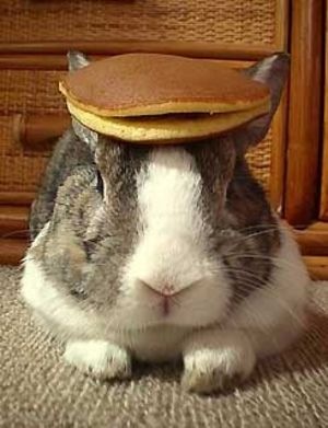 I Don T Know Why Pancakes On A Bunny Is Funny It Just Is Kittens And Puppies Rabbit Cute Animals
