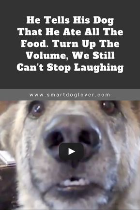 He Tells His Dog That He Ate All The Food. Turn Up The Volume, We Still Can't Stop Laughing #funnydogs