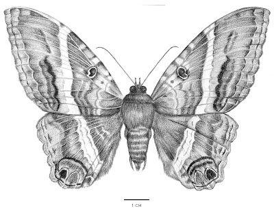 Requiem Para Un Senor Ilustracion Cientifica Animal Art Forest Illustration Illustration