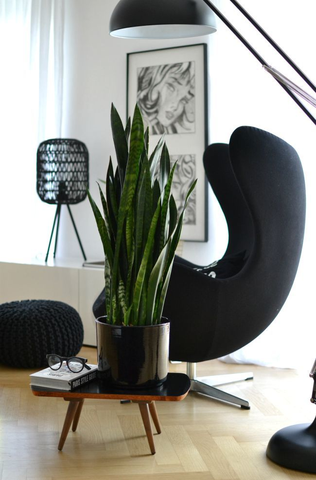 bogenhanf - gut fürs schlafzimmer INTERIOR - ZIMMERPFLANZEN