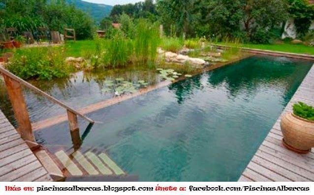 piscinas ecol gicas ideas para el campo piscinas