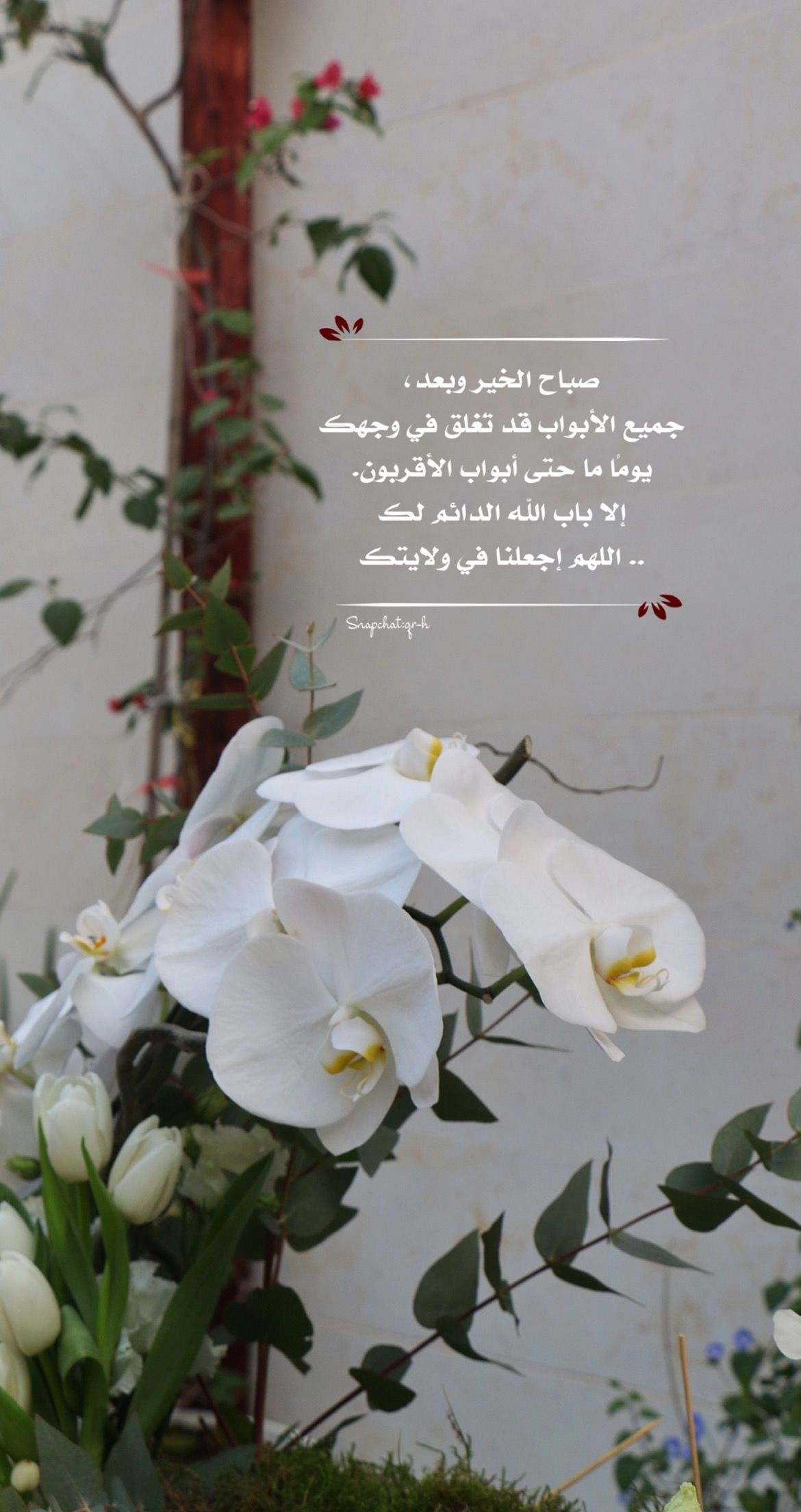 Pin By Haya On يومياتي Photo Good Morning Plants
