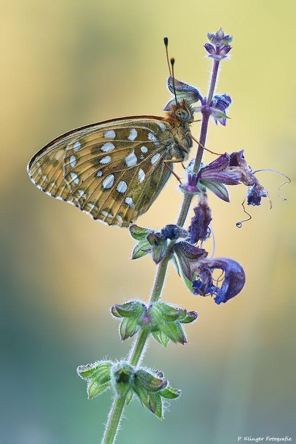 Beautiful Butterfly Photo