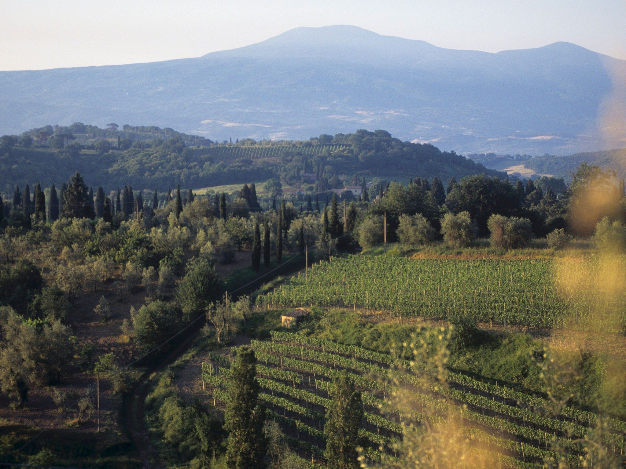 Wine Tasting at Tuscany's Best Wineries - Condé Nast Traveler