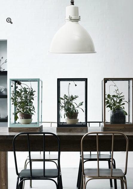 centerpiece plants