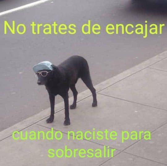 My Latin Girl Memes Divertidos Memes Memes Perrones