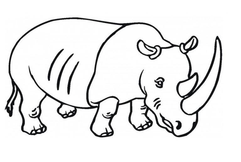 Free Printable Rhinoceros Coloring Pages For Kids Coloring Pages