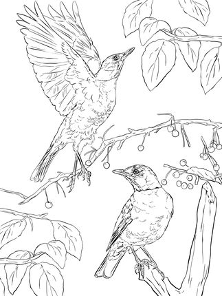 Click To See Printable Version Of Two American Robins Coloring
