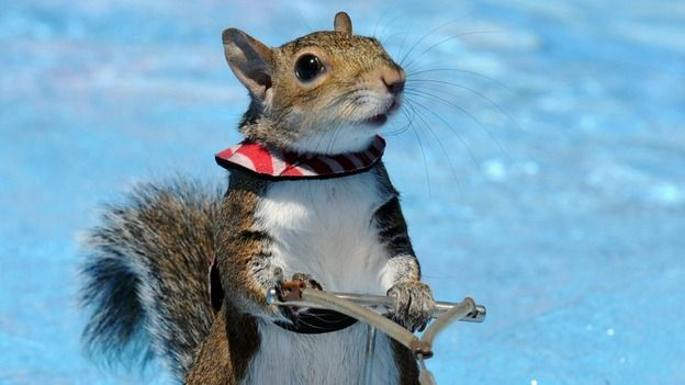 Skiing squirrel must be nuts - ITV News