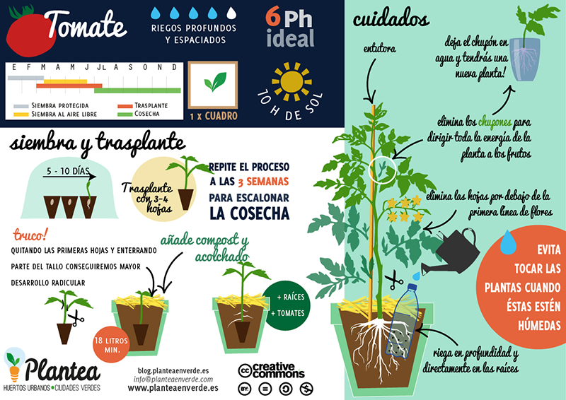 C mo cultivar tomates huerto pinterest gardens - Como plantar marihuana en casa paso a paso ...