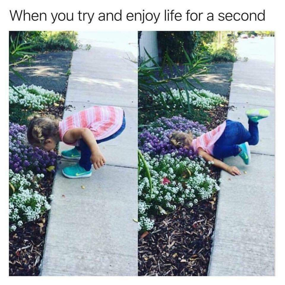 Me Trying To Enjoy Life Silly Memes Funny Relatable Memes Funny Pictures