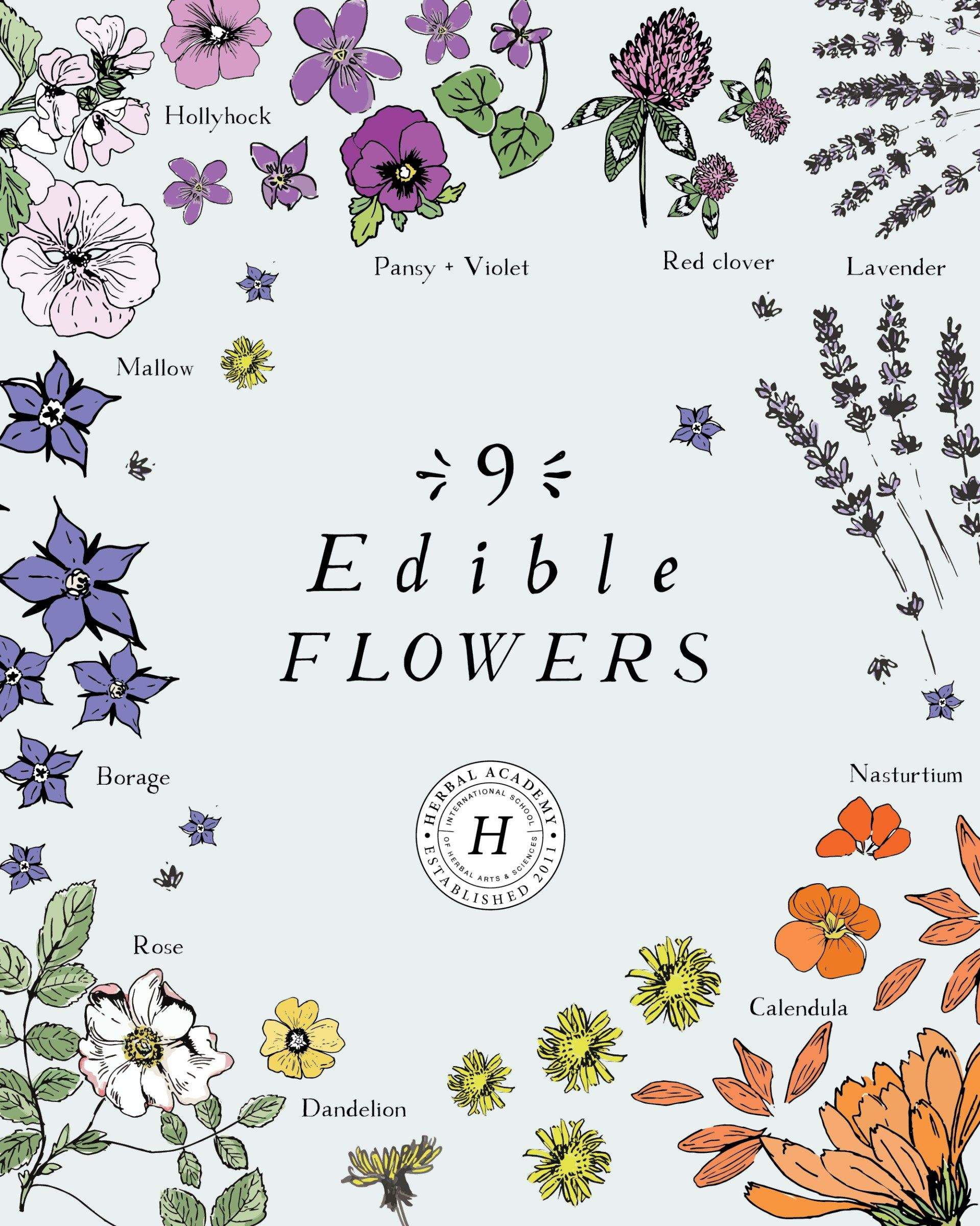 9 Edible Flowers And How To Use Them – Herbal Academy