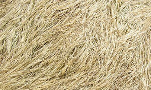 tall grass texture seamless. Grass Textures Tall Texture Seamless