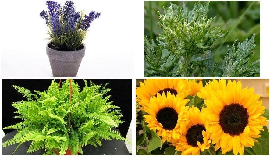 13 plantas que atraen la energía positiva a tu vida plantas