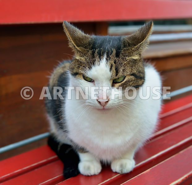 Not Happy Street Cat Showing His Emotions With Ears Cats Animals Happy