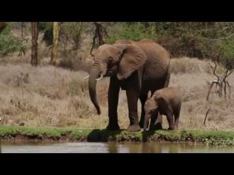 Published on 22 May 2013 - The Royal Foundation's film on conservation for the #endwildlifecrime conference