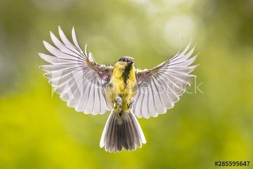 Stock Image: Bird in flight on green garden background