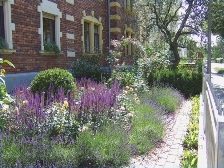 Front Yard With Lavender