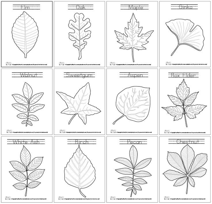 Leaf Coloring Pages Leaves Learning and Montessori
