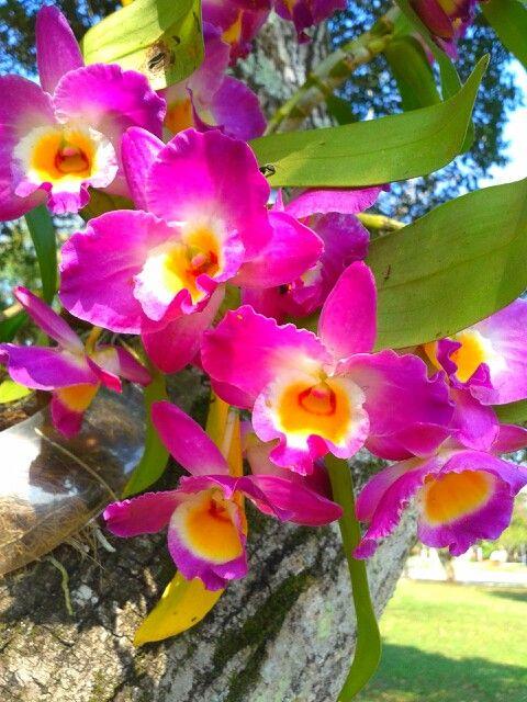 Minhas orquideas lindas!!