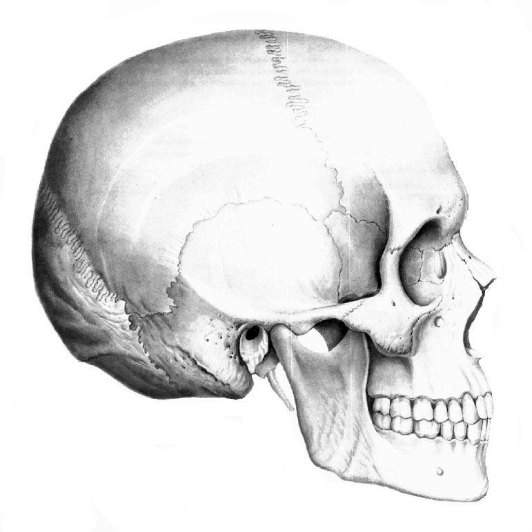 череп - Поиск в Google | Рисунок черепа, Наброски ...