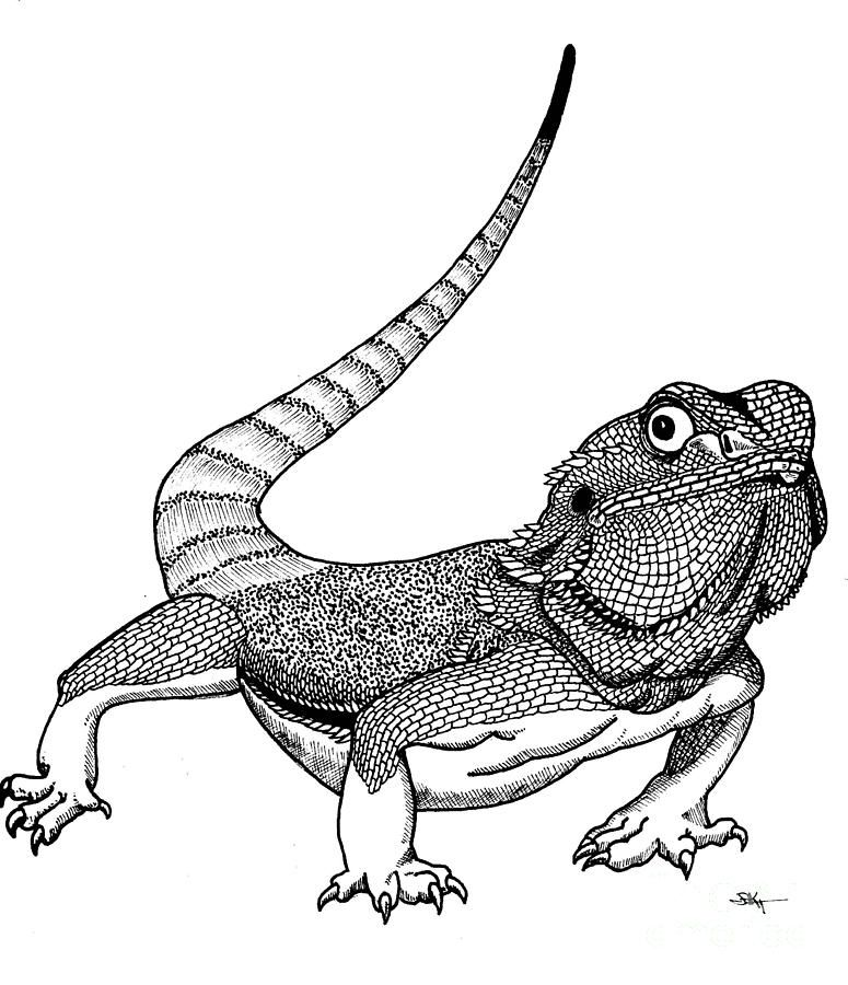 View Gallery With 37 Bearded Dragon Drawing Images Dragon Coloring Page Pet Dragon Bearded Dragon Colors