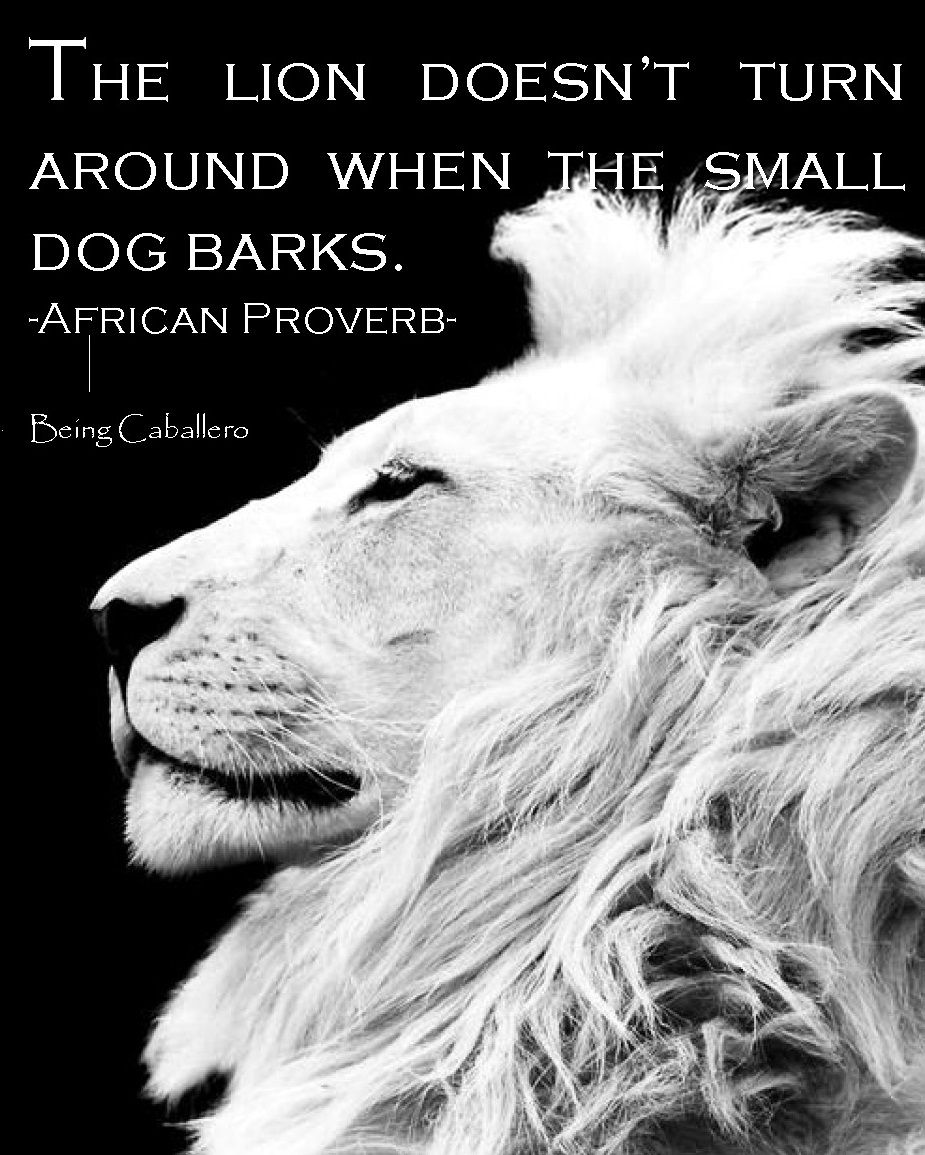 The Lion Doesn T Turn Around When The Small Dog Barks Martial Arts Quotes Great Motivational Quotes African Proverb Lion Quotes