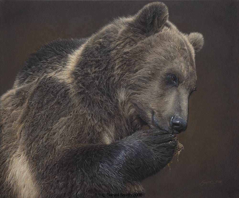 A Nose For Honey Bear Paintings Bear Art Wildlife Artists