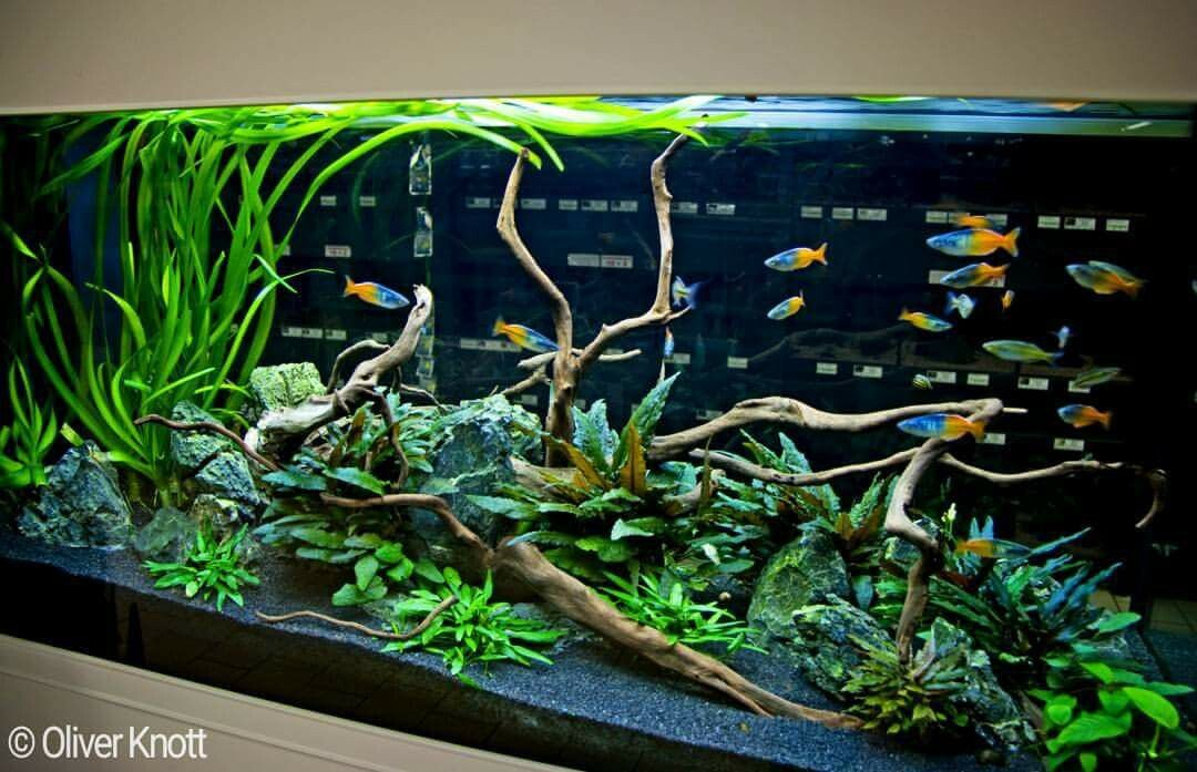 350 liter very low maintenance tank easy plants and no for Low maintenance fish tank