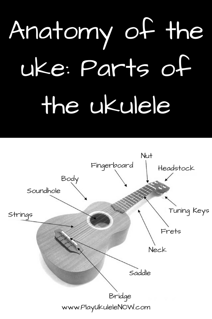 Anatomy Of The Uke Parts Of The Ukulele Ukulele Tips For