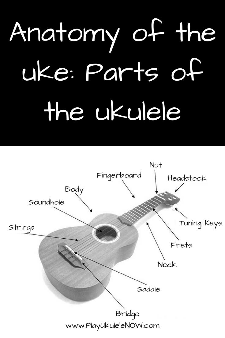 Anatomy of the uke: Parts of the ukulele | Pinterest | Anatomy and ...