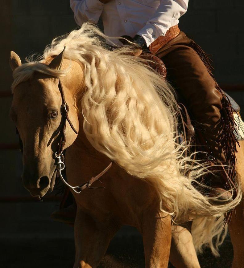 4shared View All Images At أجمل خيول العالم صور Folder Beautiful Horses Palomino Horse Show Horses