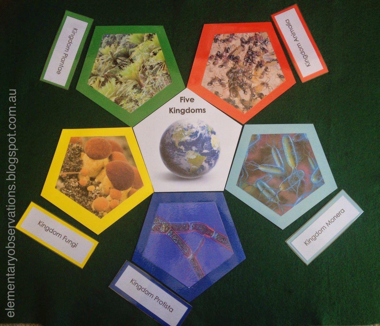 Elementary Observations Free Five Kingdoms Printables
