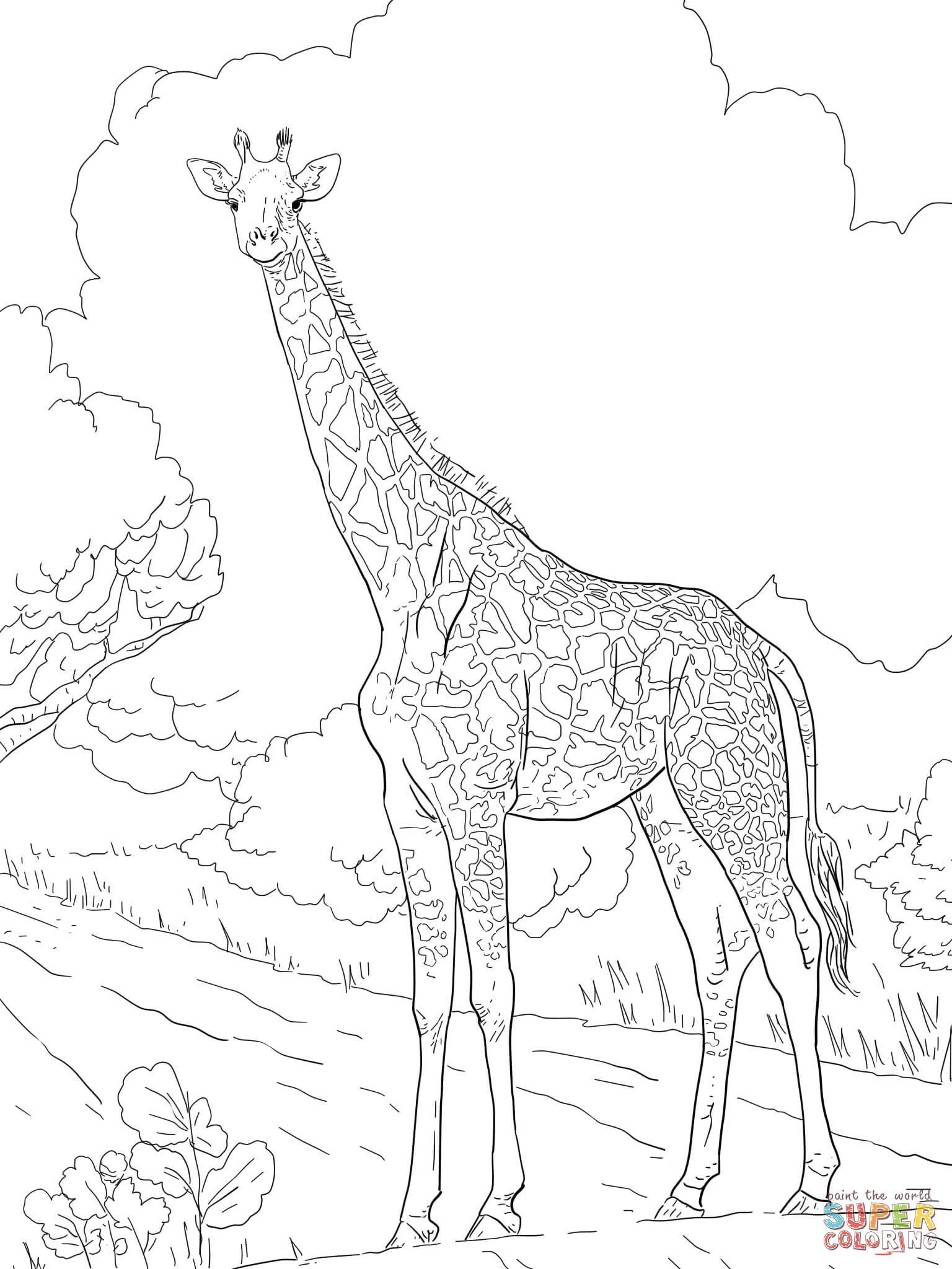 Giraffenmuster Malvorlage