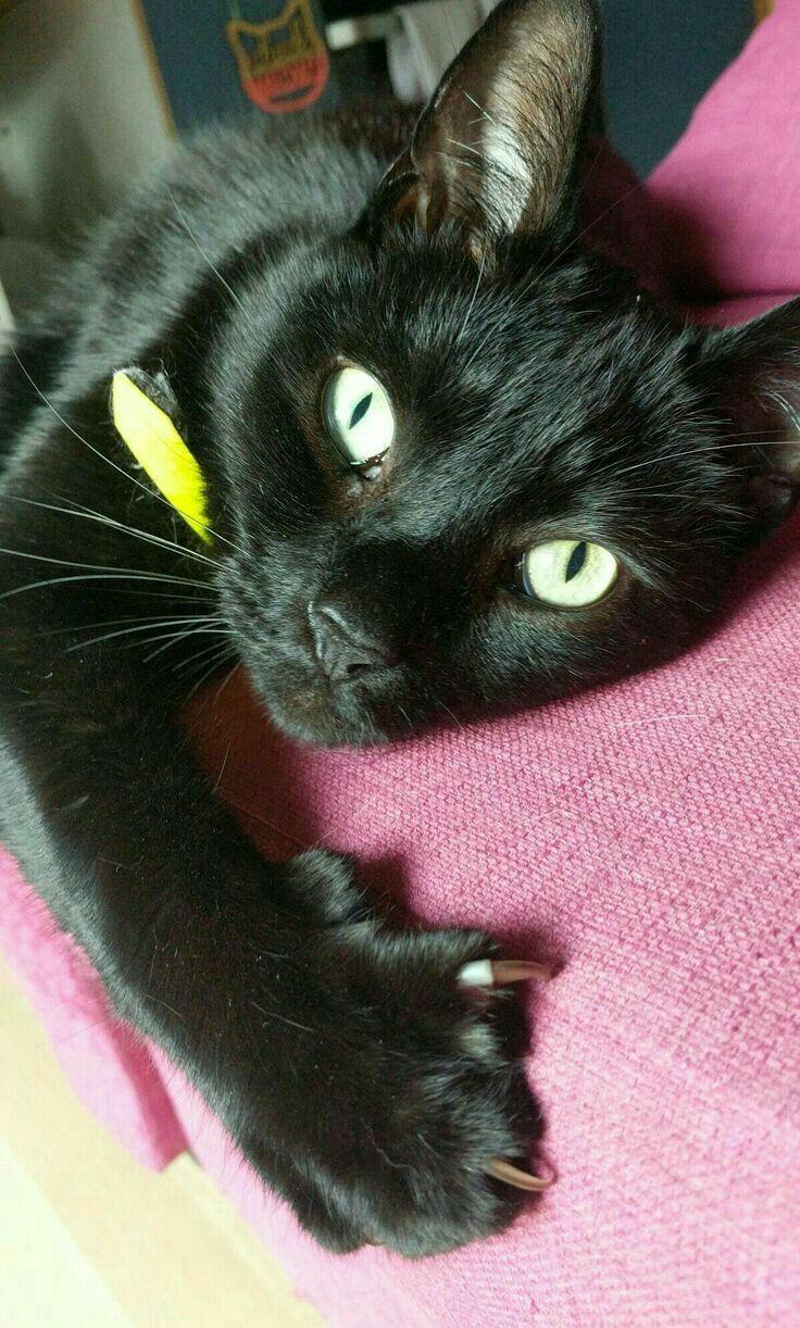 💓 Cats, Pretty cats, Black cat