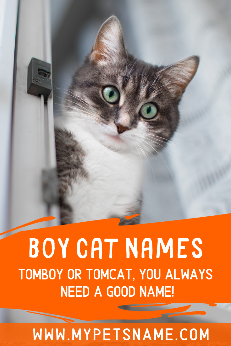 A good name sets the label for a boy cat's personality