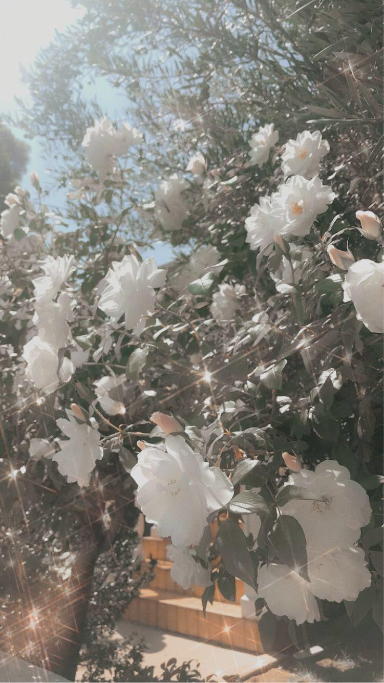 Aesthetic White Flowers Wallpaper White Flower Wallpaper Black Roses Wallpaper Flower Wallpaper
