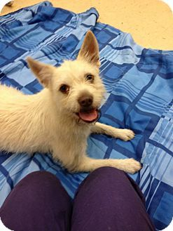 Pin By Rosemary Dinn On Maltese Cairn Terrier Mix Dogs Terrier Mix