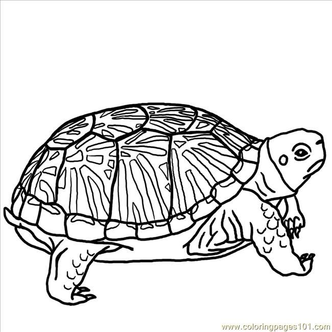 Turtle pictures coloring free printable coloring page Ornate Box