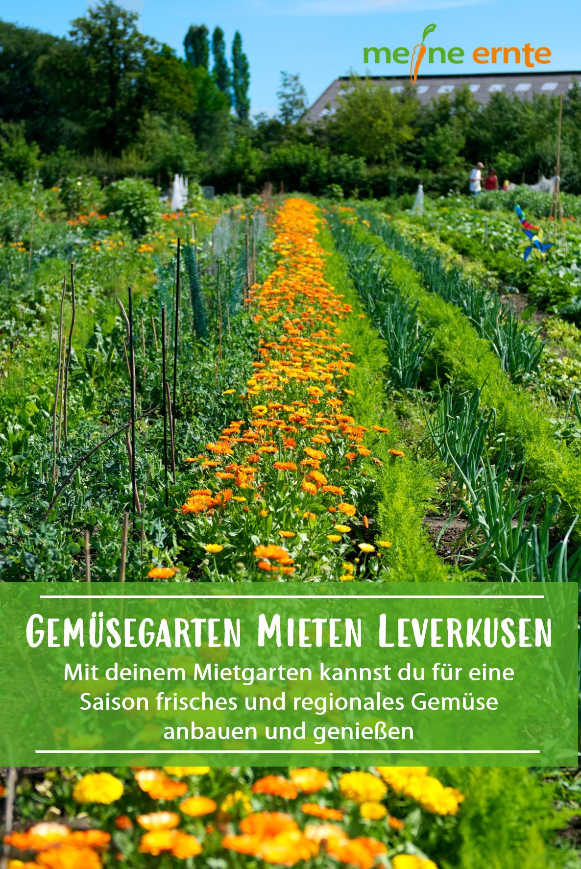 Gemusegarten In Leverkusen In 2020 Garten Gemuseanbau Bepflanzung