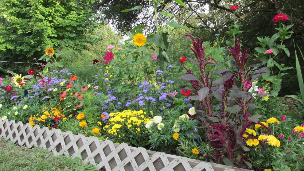 Exceptional Grow Your Own Cutting Garden In As Little As 32 Square Feet